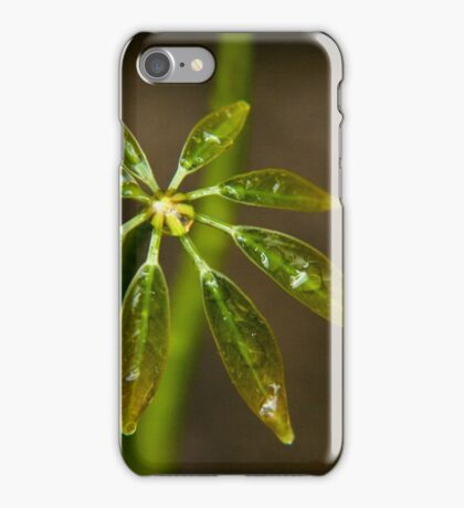 Schefflera plant leaves iPhone Case/Skin