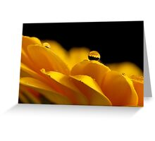 Gerber daisy refracted in a water drop Greeting Card