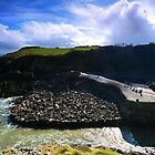 Stackpole Quay with figures by Mark Haynes Photography