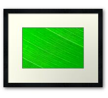 Macro shot of green leaf, nature pattern background Framed Print