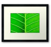 Macro shot of green leaf, nature pattern background Framed Print