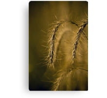 Tall Grass Summer Detail Canvas Print