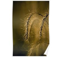 Tall Grass Summer Detail Poster