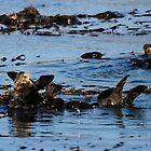 PACIFIC SEA OTTERS by fsmitchellphoto