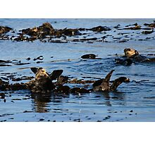 PACIFIC SEA OTTERS Photographic Print