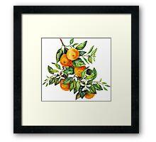 Tangerine Branch Framed Print