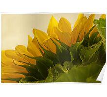 Sunshine Under The Petals  Poster