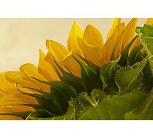 Sunshine Under The Petals  Photographic Print
