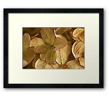 Hydrangea Petals - Macro  Framed Print