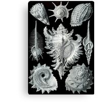 Ernst Haeckel Seashells Canvas Print