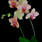ORCHID1024 by Thomas Barker-Detwiler