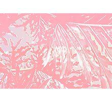 Pink Tropics Photographic Print