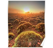 Gawler Ranges sunrise Poster