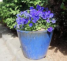 Pot of Blue Pansies by Kathleen Brant