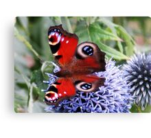 Butterfly on Veitch Canvas Print