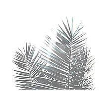 Sun Plant Photographic Print