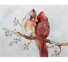 Lovely Cardinals Photographic Print