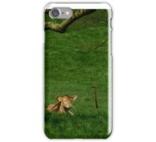 Chillin in the grass iPhone Case/Skin