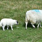 Ewe and Lamb by BlueMoonRose