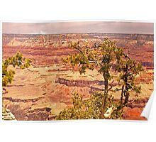 Grand Canyon National Park- Arizona Poster