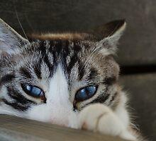 Blue eyed beauty by Halobrianna