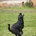 Keeping the Eye on the Ball by Steve Randall