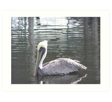 Pelican near anclote island Art Print