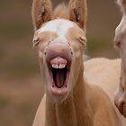 Baby Teeth by Kent Keller