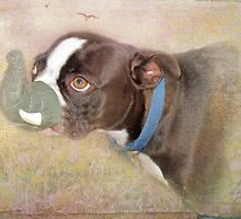I'd Rather Chase Birds Than Wear This Elephant Nose by Susan Werby