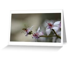 Busy bee landing on flower Greeting Card