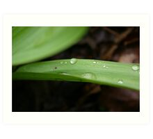 water droplets on leaf Art Print