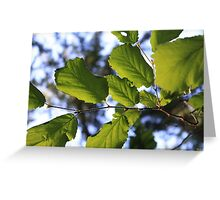 Leaves on the wind, See them fly. Greeting Card