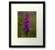 Fragrant Orchid, Dun Eochla, Inishmore Framed Print