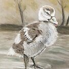 The not so ugly duckling  by Ray Jackson