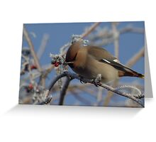 Winter visitor in the trees Greeting Card