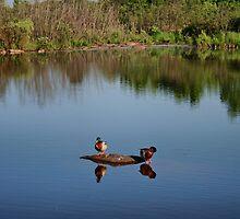 The Ducks by Ed Warick