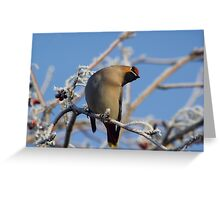 Waxwing in the bushes Greeting Card