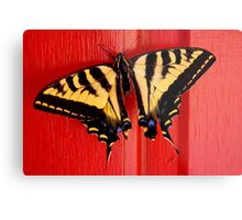 tiger swallowtail butterfly on unusual background Metal Print