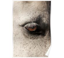 Horse in the paddock Poster