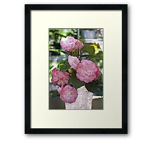 Pretty Pink Potted Begonias  Framed Print