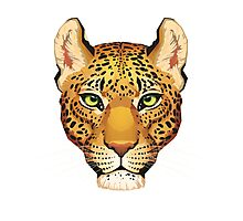 Leopard Face Photographic Print