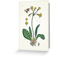 yellow cowslip and bee Greeting Card