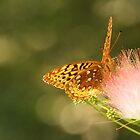Great Spangled Fritillary by Linda  Makiej Photography