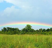 Eastern Shore Rainbow by Lexi