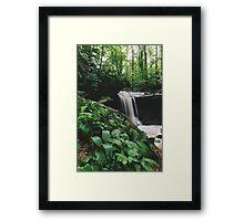Jungle or Ohio? Framed Print