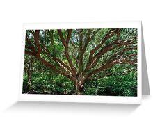 Beautiful Huge Tree in Jejudo, South Korea Greeting Card