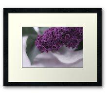 Lilac Love Framed Print