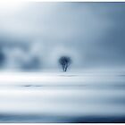 A very foggy Day.......Black Forest by Imi Koetz