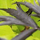 Garden Leaves by Jonesyinc