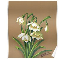 Loddon Lily - acrylic painting Poster